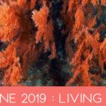 Tendance : Couleur PANTONE 2019, 5 produits lifestyle et déco