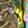Flik Flak, une montre pour sauver les koalas d'Australie